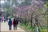 新竹麗池公園.賞櫻記:IMG_09.jpg