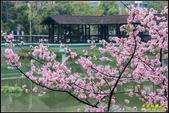新竹麗池公園.賞櫻記:IMG_16.jpg