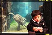 澎湖水族館:IMG_05.jpg