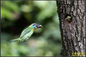 石門水庫‧五色鳥想飛:IMG_15.jpg