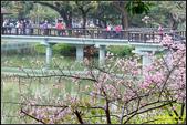 新竹麗池公園.賞櫻記:IMG_19.jpg