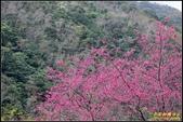 福山櫻花道‧冠羽畫眉花鳥圖:IMG_03.jpg