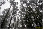 竹子湖‧黑森林:IMG_07.jpg