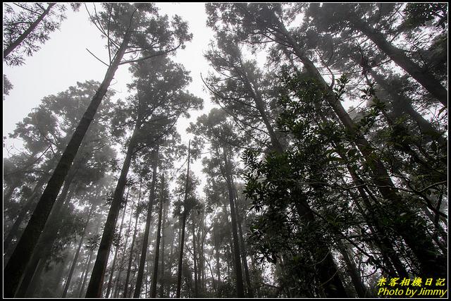IMG_07.jpg - 竹子湖‧黑森林