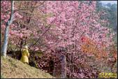 司馬庫斯櫻花季:IMG_20.jpg