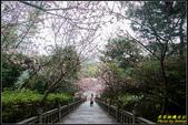 碧山巖櫻花隧道:IMG_09.jpg