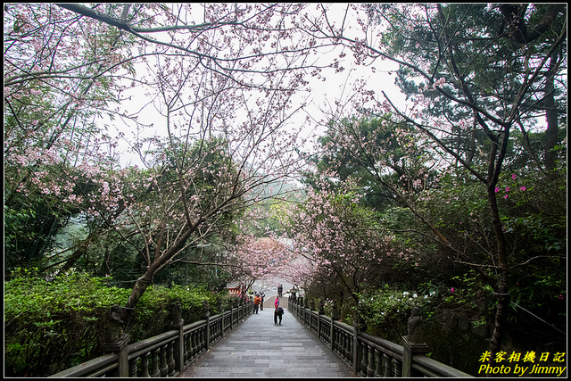 IMG_09.jpg - 碧山巖櫻花隧道