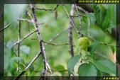 棲蘭國家森林遊樂區:IMG_10.jpg