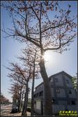 中央大學木棉大道:IMG_16.jpg
