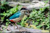三星龍泉步道‧八色鳥現身:IMG_14.jpg
