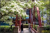 新竹護城河親水公園‧流蘇花:IMG_10.jpg
