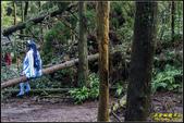 竹子湖‧黑森林:IMG_15.jpg