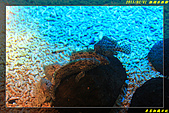 澎湖水族館:IMG_09.jpg
