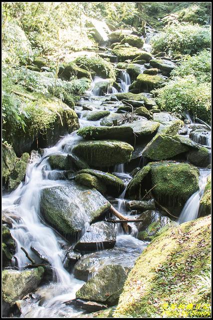 IMG_20.jpg - 拉拉山自然保護區