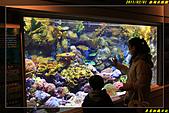 澎湖水族館:IMG_10.jpg