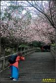 碧山巖櫻花隧道:IMG_08.jpg