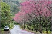 福山櫻花道‧冠羽畫眉花鳥圖:IMG_01.jpg
