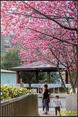 樹林地政事務所八重櫻:IMG_10.jpg