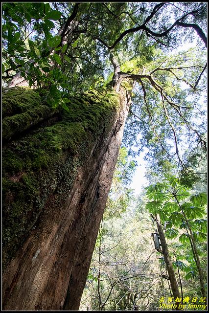 IMG_29.jpg - 拉拉山自然保護區
