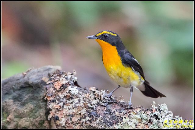 IMG_14.jpg - 野柳稀有鳥種