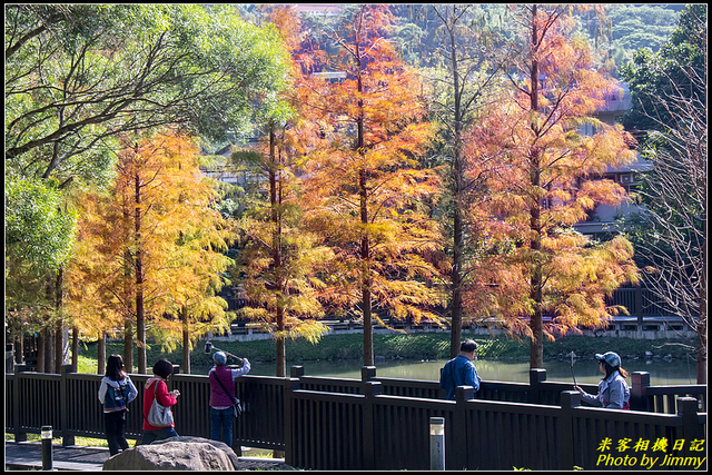 IMG_10.jpg - 原住民文化主題公園落羽松