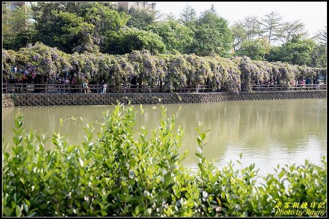 IMG_02.jpg - 龜山大湖紀念公園‧紫藤流蘇齊綻放