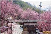 司馬庫斯櫻花季:IMG_21.jpg
