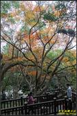 辭修公園楓紅:IMG_21.jpg