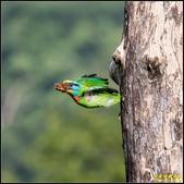 來拍五色鳥‧石門水庫:IMG_12.jpg
