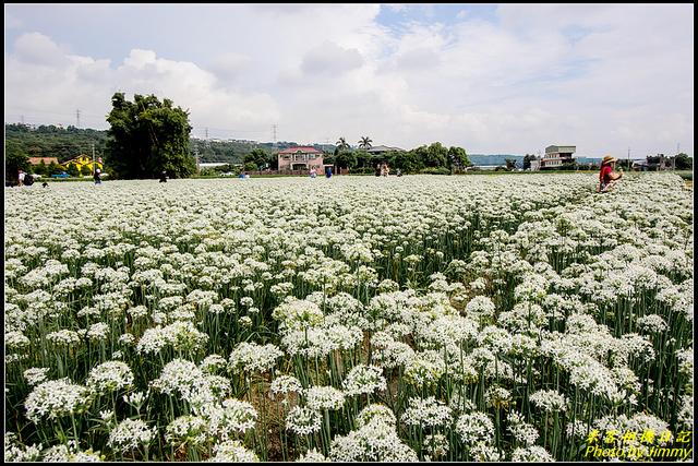 IMG_07.jpg - 大溪韭菜花田