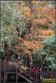 辭修公園楓紅:IMG_09.jpg