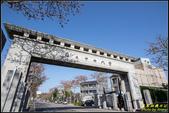 中央大學木棉大道:IMG_04.jpg