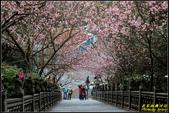 碧山巖櫻花隧道:IMG_06.jpg