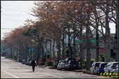 中央大學木棉大道:IMG_05.jpg