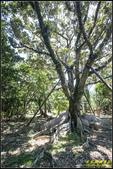墾丁森林遊樂區‧地質與生態奇景:IMG_17.jpg