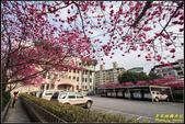 樹林地政事務所八重櫻:IMG_03.jpg