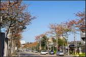 中央大學木棉大道:IMG_09.jpg