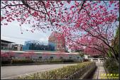 樹林地政事務所八重櫻:IMG_04.jpg