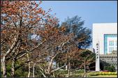 中央大學木棉大道:IMG_11.jpg