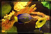 澎湖水族館:IMG_13.jpg