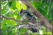 台大領角鴞:IMG_16.jpg