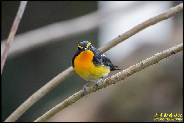 IMG_15.jpg - 野柳稀有鳥種