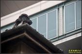 新竹市美術館(新竹市役所):IMG_12.jpg
