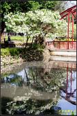 新竹護城河親水公園‧流蘇花:IMG_06.jpg