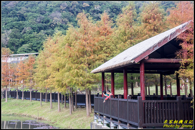 IMG_11.jpg - 原住民文化主題公園落羽松