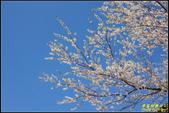 司馬庫斯櫻花季:IMG_08.jpg