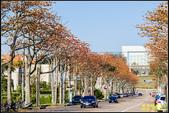 中央大學木棉大道:IMG_08.jpg