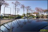 中央大學木棉大道:IMG_18.jpg