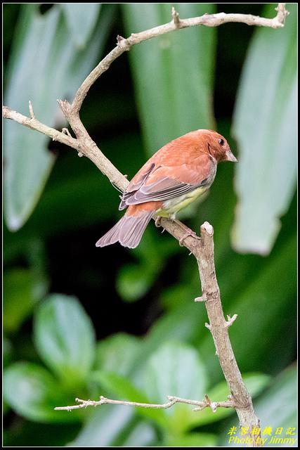 IMG_04.jpg - 野柳稀有鳥種