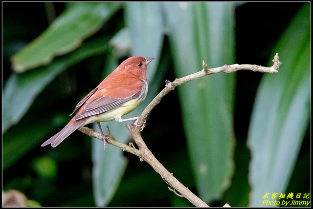 IMG_05.jpg - 野柳稀有鳥種